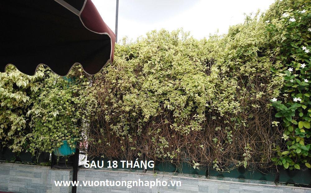 Tuong-dung-san-thuong-khach-san-alpha
