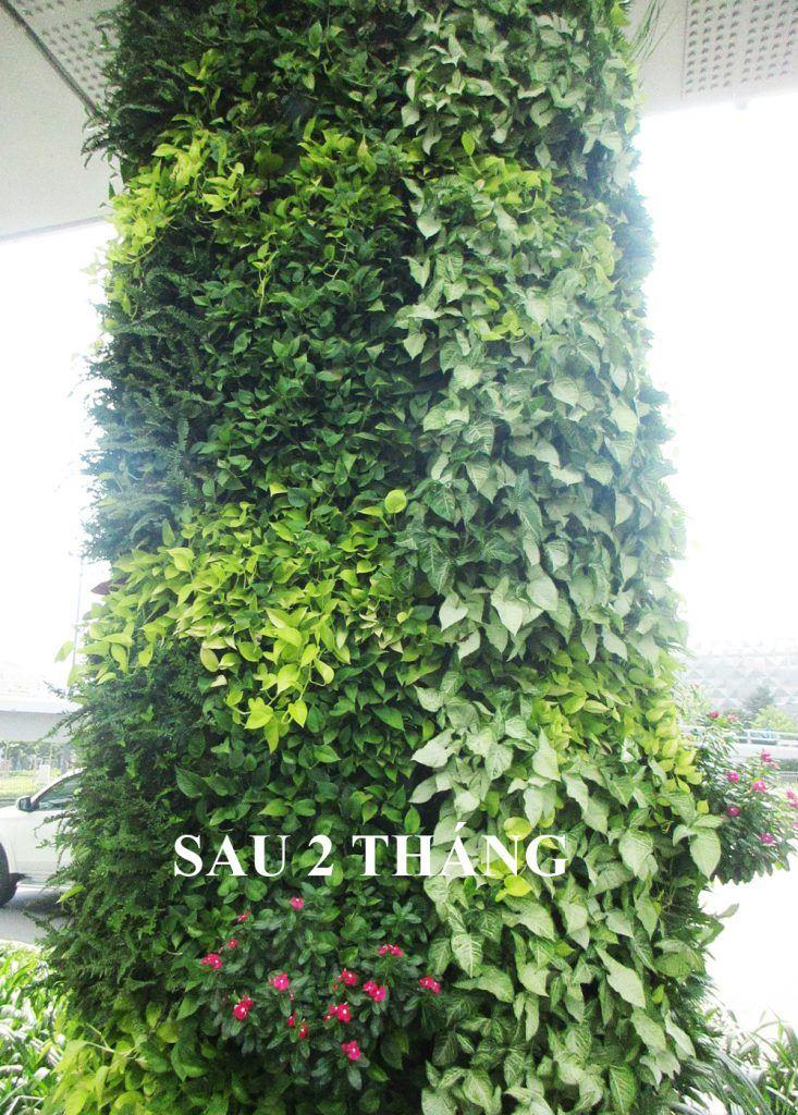 so-sanh-tuong-xanh-dung-Minigarden-sau-2-thang-20-733x1024