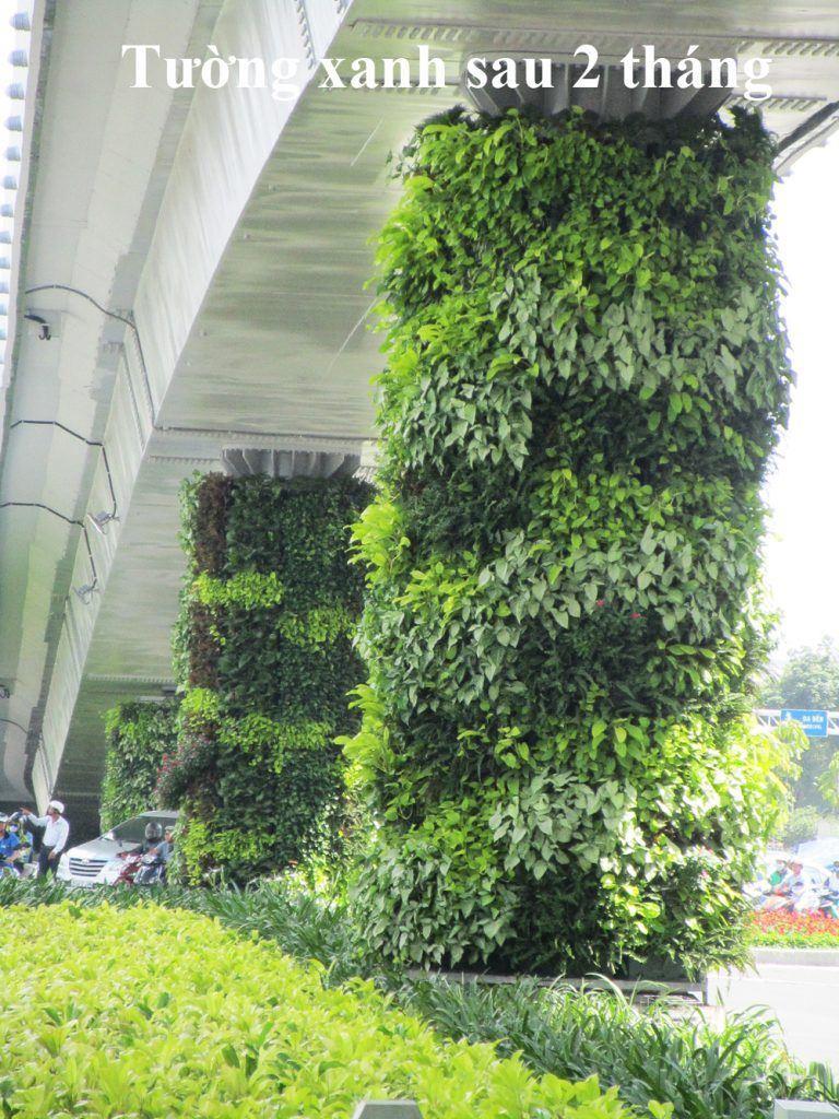 so-sanh-tuong-xanh-dung-Minigarden-sau-2-thang-768x1024