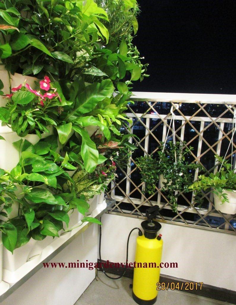 thi-cong-tuong-xanh-dung-ban-cong-chung-cu-Minigarden 2