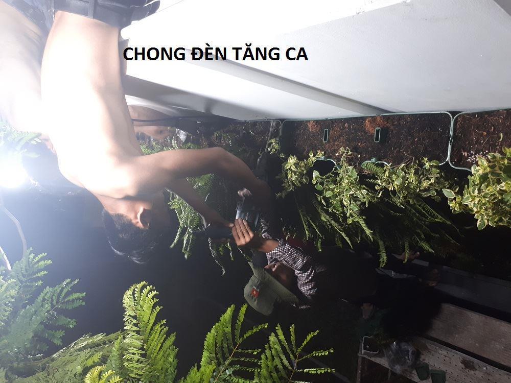 Thi-cong-vuon-tuong-dung-minigarden-long-an 9