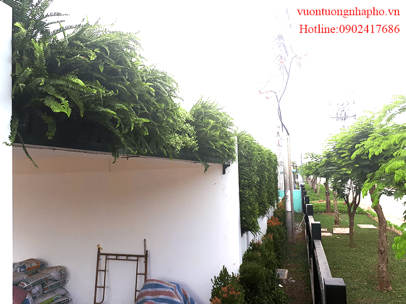 tuong-xanh-dung-nha-xuong-long-an-minigarden 11