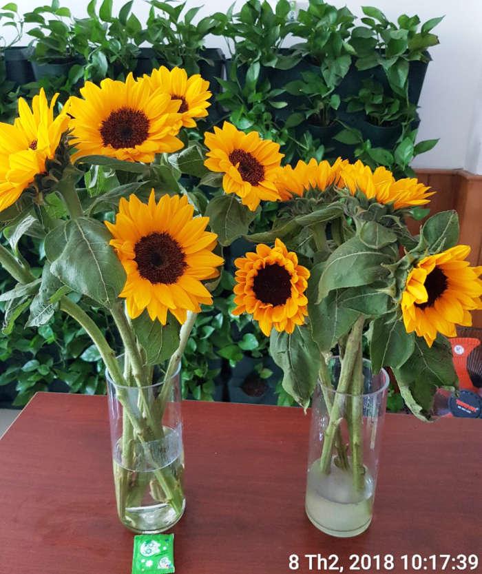 Gói dưỡng hoa Longlife Israel 5 - Copy