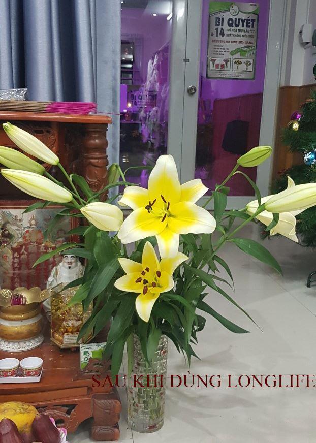 xu-ly-hoa-lily 2
