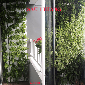 cay-ban-cong-dung-minigardenvietnam 33