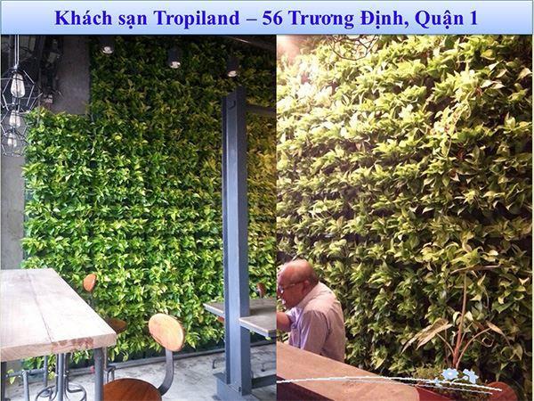 khang-Ngoc-Khanh-Minigarden 11