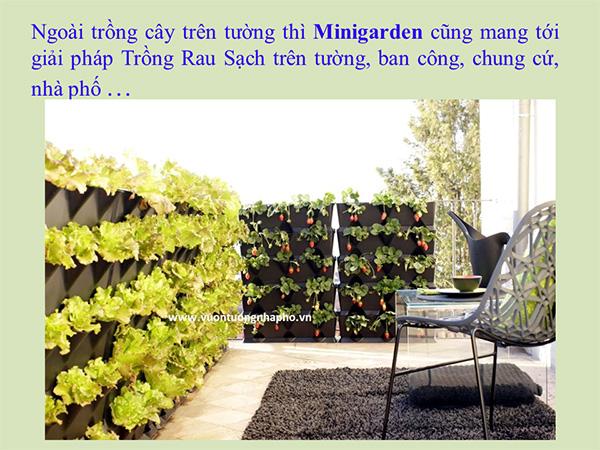 khang-Ngoc-Khanh-Minigarden 3
