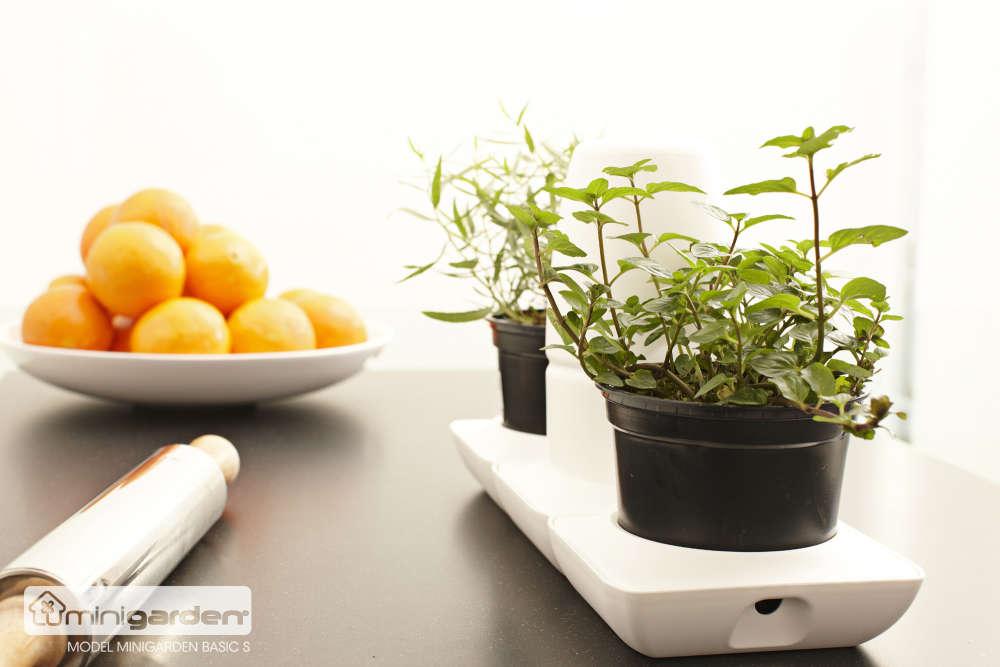 Chậu Trồng Rau Tự Động Tưới Basic S trồng sà lách ngày thứ 12