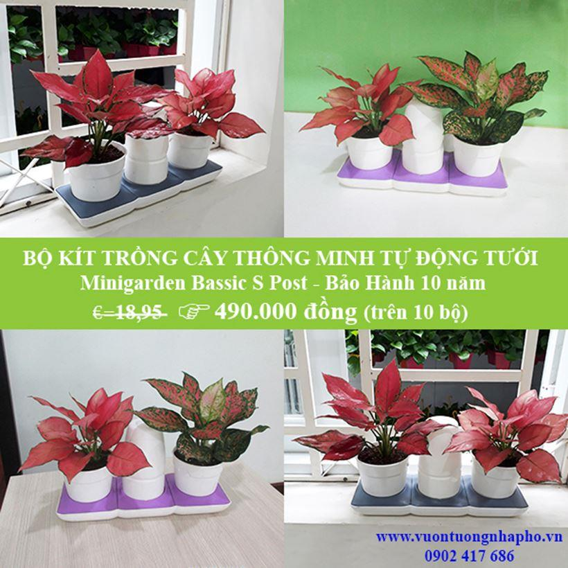 Chau-trong-cay-tu-tuoi-basic-s-bao-hanh-100-nam 6