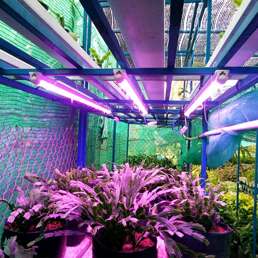 Đèn Quang hợp cho Cây Hoa tại một nhà vườn